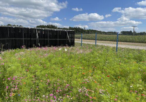 TBE Energiezaun Blumenwiese